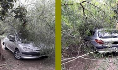 EL PUEBLITO, SAN JAVIER : RAMAS DE UN ÁRBOL CAYÓ SOBRE UN AUTO ,SOLO DAÑOS MATERIALES.