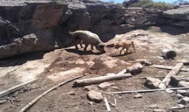 MINA CLAVERO : ALLANAMIENTO EN EL MARCO DE UN HECHO DE MALTRATO ANIMAL.