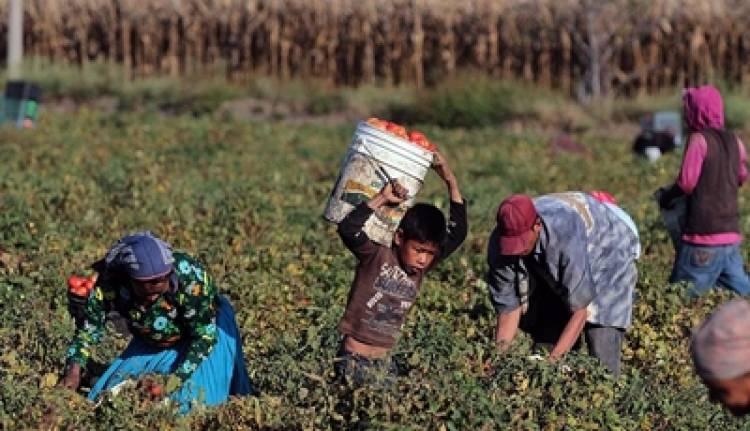 """Rescataron a más de 100 trabajadores rurales """"en condiciones infrahumanas"""""""