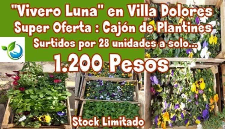 """""""VIVERO LUNA"""" EN VILLA DOLORES..SUPER OFERTA EN PLANTINES, 28 UNIDADES A SOLO 1.200 PESOS."""